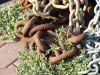 chains vines